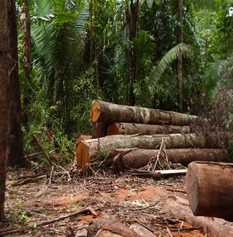 Retirada de cascalho e madeira ilegal da terra indigena Mura no rio Itaparanã