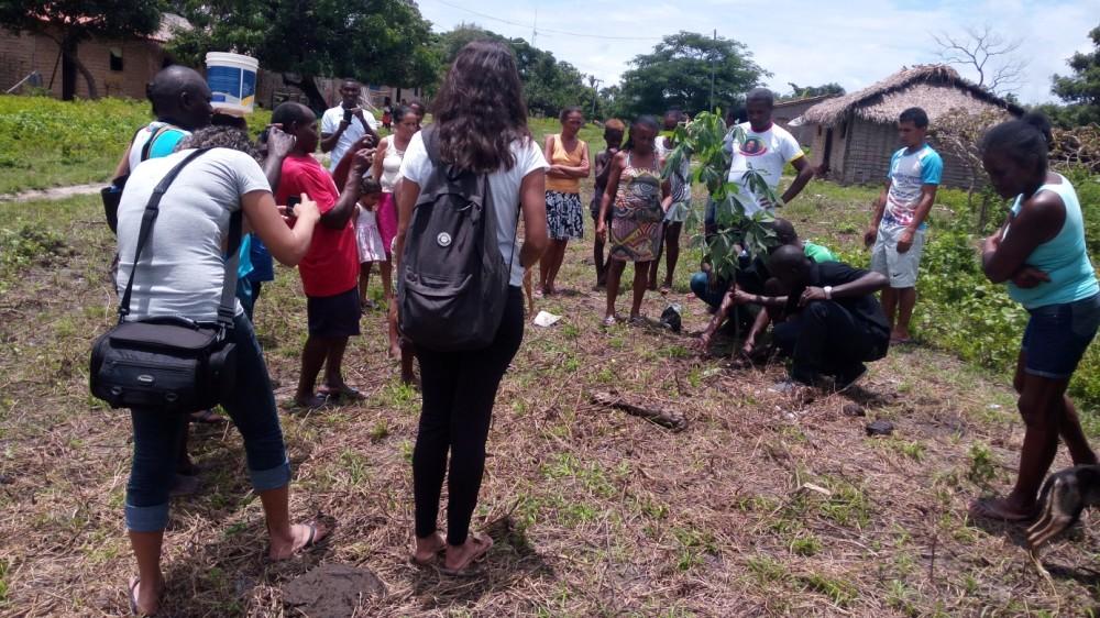 Plantação de mudas de plantas na comunidade quilombola Bela Vista